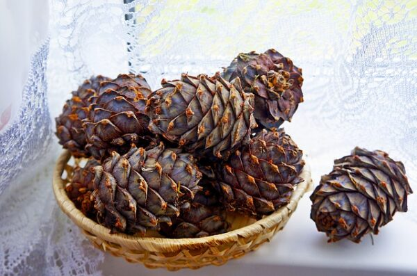 cones-2042976_640